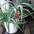 Using houseplants to Clean and Purify Indoor Air