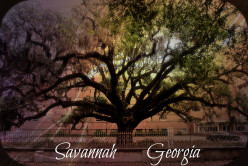 Savannah: Georgia's Oldest Preserved City:  History, Travel and Tourism