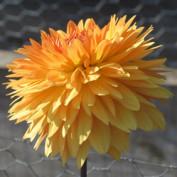 GardenTravel profile image