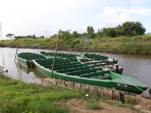 The boats that take you through the swamp