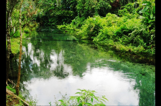 Pristine Water Source in Kimbe, West New Britain Province, Papua New Guinea