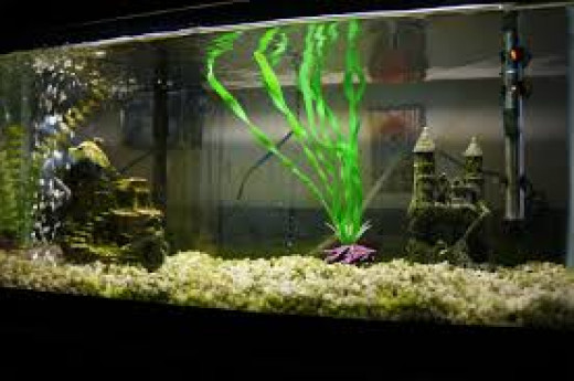 Setting Up A Home Aquarium? Check Out These Tips.