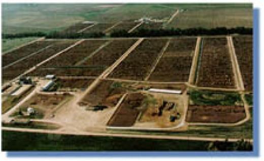Darr Feedlot in Cozad, Nebraska.  Nebraska has the 3rd highest amount of Angus cattle in the nation.