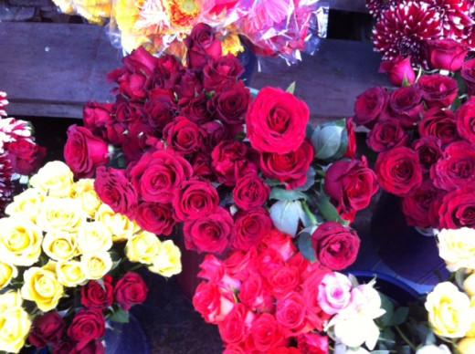 Beautiful Flowers as Healers