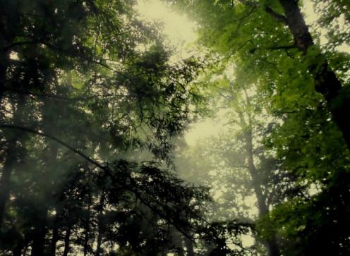 smoke among the branches