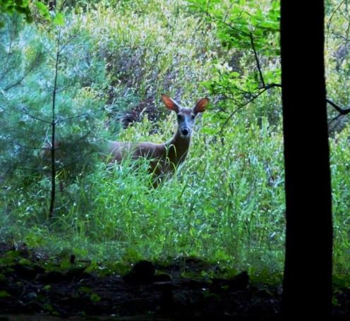 curious campsite visitor