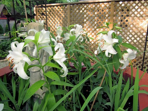 Hot tub planter: a swath of lilies. Photo by timorous
