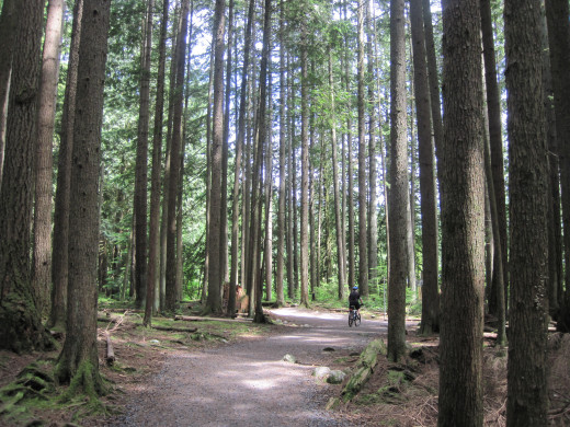 Lower Seymour Conservation Trail