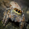 Are Spiders a Chemical Free Way to Eliminate Pests in Your Garden?
