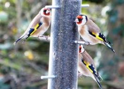 Common Garden Bird Species To Watch Out For In The South of England