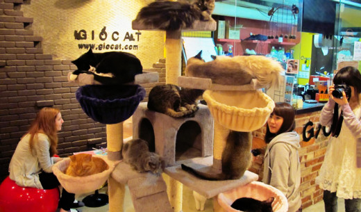 Bahrain cat cafe