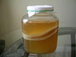 Shows kombucha tea growing.