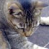 peachpurple profile image