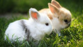 How To Care For New Baby Rabbits and How To Breed Rabbits For Profit