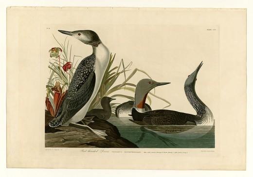 Birds of America .   John James Audubon