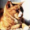 Wilfcat profile image