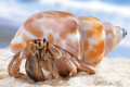 How To Care For Pet Hermit Crabs and How To Care For Giant African Land Snails