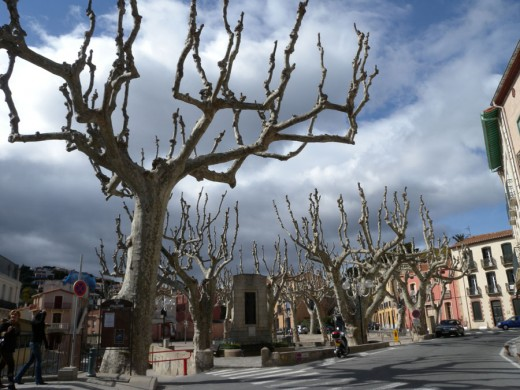 This series of trees were awe inspiring.  They were found in the town square of L'Ametlla Mer.
