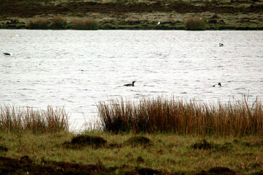 Divers are difficult to see on the water especially from a distance.  This at Mill Loch Eday. geograph.org