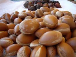 Argan nuts.
