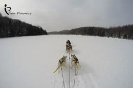 Dog Sledding - Chocpaw Expeditions