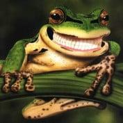 Froggy213 profile image