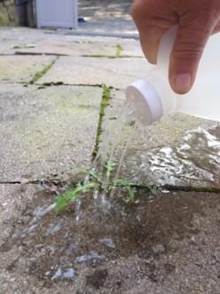 Use Vinegar or Baking Soda to Kill Weeds