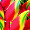 Rangoon House profile image