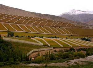 Pisco Elqui Fields of Chile