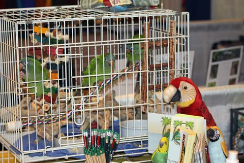 This was So-Cal Parrot's educational exhibit at the San Diego Bird Fair in 2014.  The birds in the cage are conures that were un-releasable.