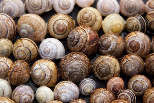 Things to Know Before Starting Your Snail Farming Business