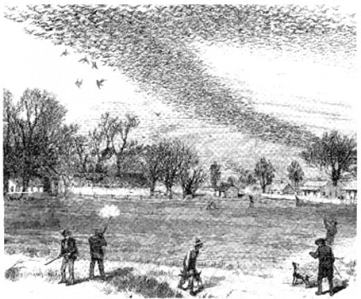 Passenger pigeon hunt