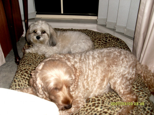 Goldie, at the front, letting Jazzie share her bed.