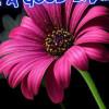 sanathara profile image