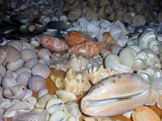 Do you see any cone shells in this sea shell collection?  There are many shells on the beach which look almost like cone shells.  I don't see any cone shells in this collection.