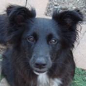 JohannDog profile image