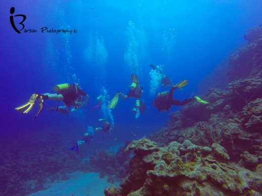 Snorkelling & Diving  in Cuba