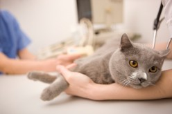Urinary Problems in Cats