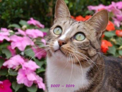 Obituary:  Joey the Garden Cat