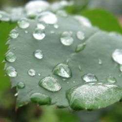Rain water can be used for everyday tasks!