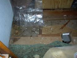 Our Fight Against Termites: Not a Commercial
