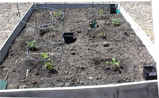 How Close Can You Put Tomatoes In A Raised Bed