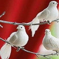 White Peace Dove Ornaments and Gifts
