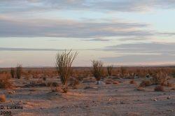 Yuha Desert Sunrise (just south of the Anza-Borrego Desert State Park).