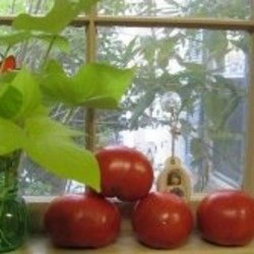 Recipe below for Tomato Pie