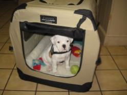 Port-a-Crate Pet Home