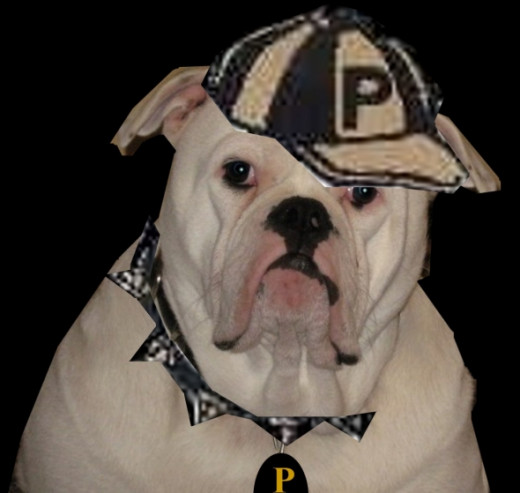 Bruno as the Pendleton Bulldog