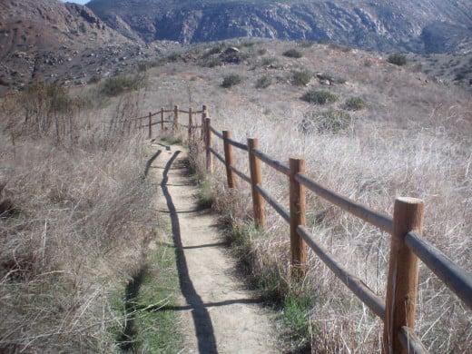 Fence by Darlene Luckins