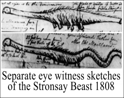 Eye witnesses sketches of the Stronsay beast