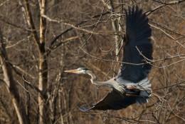 Title : The Freedom Glide    (Taken : 3/21/09    Location : Richmond, VA)